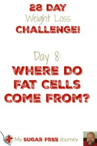 Day 8: Where Do Fat Cells Come From?